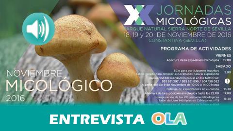 Las «Jornadas Micológicas del Parque Natural Sierra Norte de Sevilla» celebran su 20 aniversario con una programación especial que se extiende todo el mes de noviembre