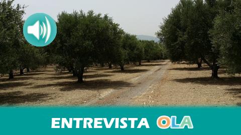 El paisaje del olivar en Andalucía sigue su andadura para conseguir el reconocimiento turístico, económico y social de ser Patrimonio de la Humanidad por la UNESCO