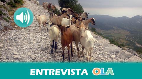 El sector ganadero andaluz de caprino denuncia la pérdida de rentabilidad debido a los bajos precios que pactan las grandes empresas por la leche de cabra