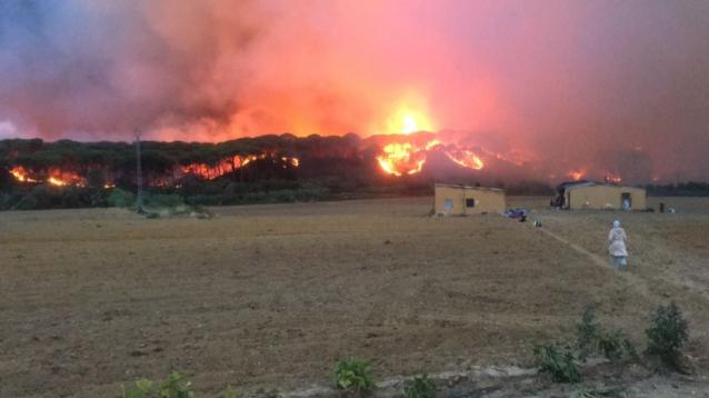Galería de imágenes sobre el desastre natural en Doñana y comunicado de Ecologistas en Acción