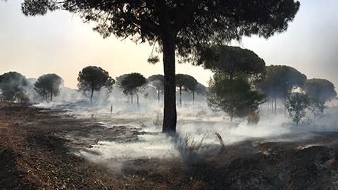 El incendio forestal iniciado la noche del sábado en Moguer alcanza el entorno del Parque Nacional de Doñana