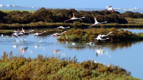 El Parque Natural Bahía de Cádiz conectará con el Corredor Dos Bahías potenciando el turismo de naturaleza