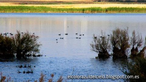 La Reserva Natural Lagunas de Campillos acogerá una nueva ruta de senderismo de acceso gratuito