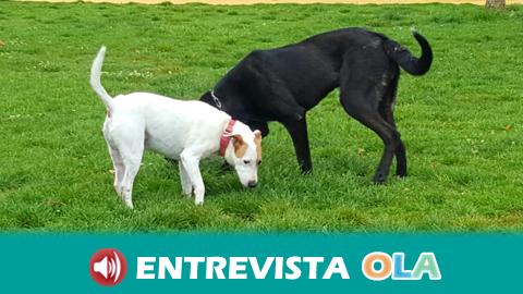 El Parlamento rechaza la propuesta de Podemos para la protección de animales en Andalucía para establecer una relación respetuosa entre las personas y los animales
