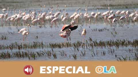 Doñana tiene que evolucionar hacia un modelo de agricultura más sostenible y abandonar los cultivos extensivos como primer paso para solucionar el problema de agua
