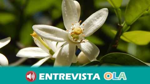 El proyecto Córdoba en Azahar coloca a esta flor como un elemento de la identidad de la provincia