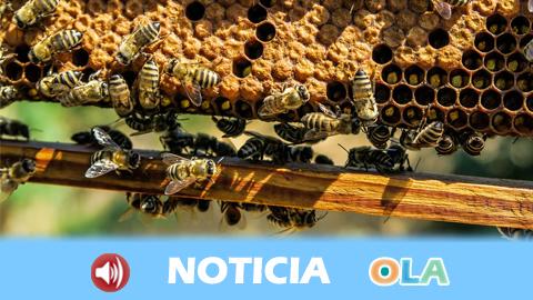 El sector apícola atraviesa la peor campaña de miel de los últimos 15 años tras un invierno excesivamente seco