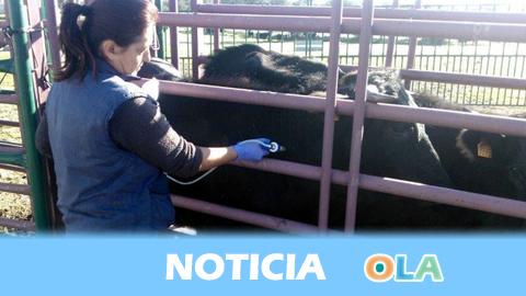 La Junta de Andalucía abre una línea de ayudas para proyectos relacionados con la defensa sanitaria ganadera