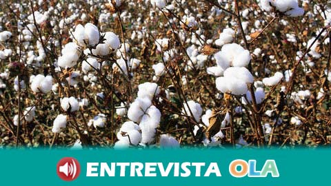 Expoalgodón celebra su sexta edición en Los Palacios y Villafranca con la participación de diferentes agentes del sector