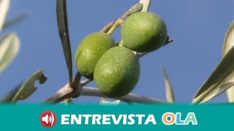 La Unión de Pequeños Agricultores y Ganaderos de Andalucía reclama a la Junta que ponga en marcha compromisos con el sector olivarero
