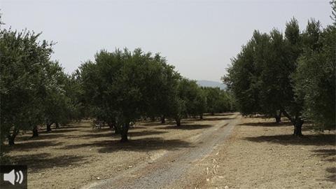 Activistas y profesionales medioambientales llevan a cabo videoconferencias gratuitas para la defensa de los caminos rurales