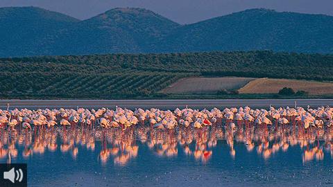La Laguna de Fuente de Piedra es el humedal más grande de Andalucía y el lugar ideal para que los flamencos realicen su parada migratoria