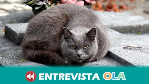 El trabajo voluntario de las protectoras de animales que atienden las colonias de gatos callejeros está permitido durante el estado de alarma