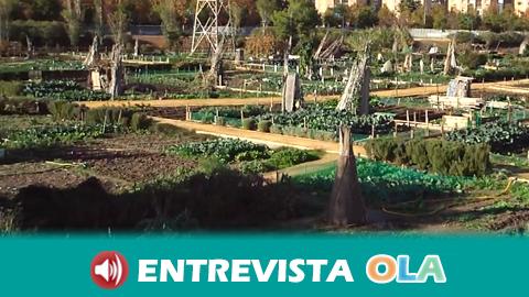 Los huertos urbanos municipales de Guillena serán reabiertos con acceso limitado para realizar labores de mantenimiento y recogida de los productos