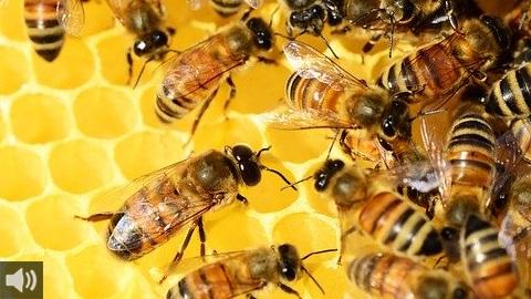 El fomento de la apicultura en entornos urbanos y concienciar sobre la importancia de las abejas centran el proyecto APICAMPUS