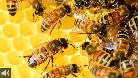Las cooperativas andaluzas promocionan el consumo de miel local como garantía de salud y sostenibilidad