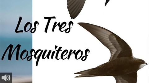 La campaña 'Los Tres Mosquiteros' promueve la protección de las golondrinas, vencejos y aviones en la localidad gaditana de Barbate
