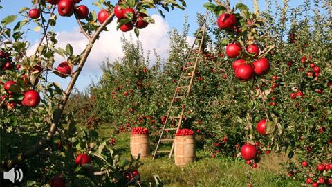 La campaña 'Adopta una tomatera' suma apoyos a las iniciativas agroecológicas que se han visto mermadas por la crisis