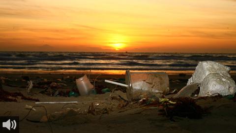 La Asociación en Defensa de la Fauna Marina convoca la campaña 'Desescalando basuras marinas' para la limpieza de las playas almerienses
