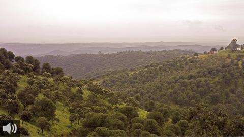 El parque natural de la Sierra de Cardeña y Montoro es cuna y sustento de especies singulares como el lince ibérico