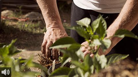 El municipio jiennense de Génave promueve el autoabastecimiento como medio para aunar sostenibilidad y recuperación de los cultivos tradicionales