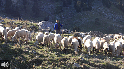 La trashumancia es garantía de bienestar animal, valor medioambiental y fija la tradición en los entornos rurales