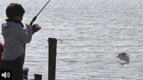 Salinas del Astur, en Punta Umbría, reabre sus puertas para ofrecer la actividad 'Pesca Segura' y acercar a las nuevas generaciones las técnicas pesqueras y de avistamiento de aves