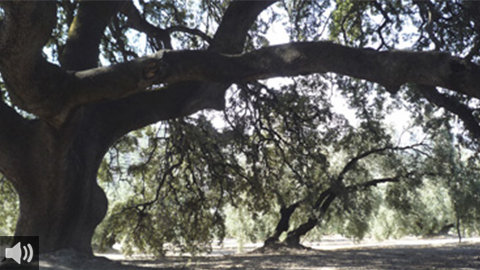 La sobreexplotación de los humedales y los acuíferos de Doñana provoca la fragmentación del territorio del Parque Natural