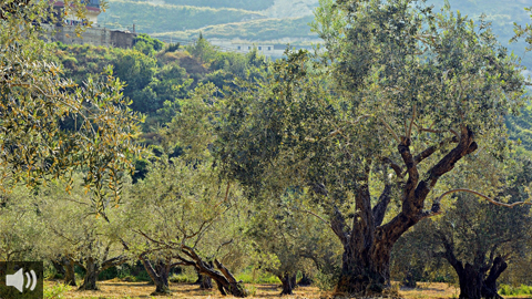 Las aguas regeneradas y el riego sostenible garantizan la vida de los cultivos, la fauna y el medio ambiente