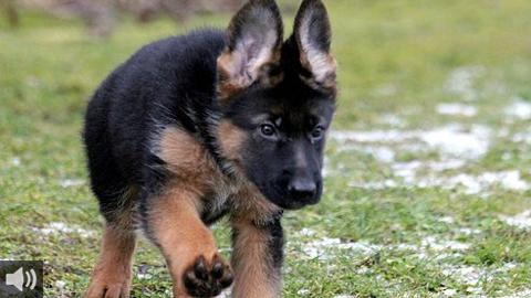 El voluntariado de la asociación ARCA organiza turnos para pasear a mascotas, apoyo en la curación de animales heridos y desplazamientos hasta el veterinario