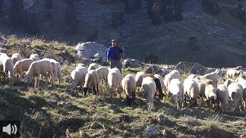 El pastoreo frena la despoblación, genera riqueza y empleo en el entorno rural e incrementa la rentabilidad de los rebaños con el aprovechamiento de los recursos naturales
