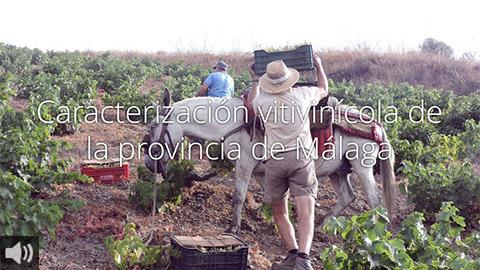 El sector vitivinícola es elemento clave en la lucha contra la despoblación del interior de la provincia de Málaga además de ser uno de sus mayores atractivos