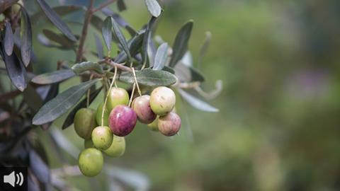 La localidad cordobesa de Montilla cuenta con su propia Denominación de Origen por ser una de las más importantes de España en cuanto a producción de vinos y aceites