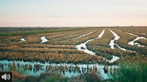 'El arroyo de la Rocina, en Doñana, ha perdido el 60% de agua en los últimos 30 años', Felipe Fuentelsaz, Agricultura y Aguas WWF