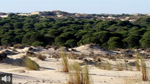 El Parque Nacional de Doñana cumple su 51 aniversario rodeado de amenazas por su difícil equilibrio biológico y ecológico