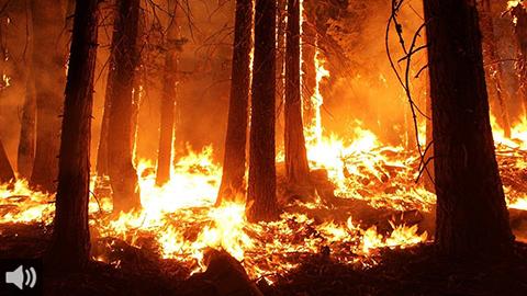Las personas afectadas por el incendio en el Andévalo onubense piden que se les tome en cuenta en la adopción de medidas para su recuperación y la del entorno