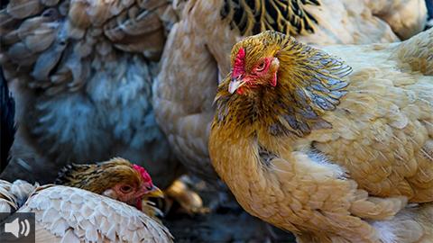 El modelo intensivo de la industria cárnica encuentra su contrapunto en la ganadería extensiva, donde prima el bienestar animal y se reducen las repercusiones medioambientales de la producción