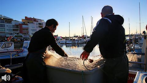 El etiquetado del pescado muestra el método de captura, una información que nos ayuda a elegir el modelo más sostenible