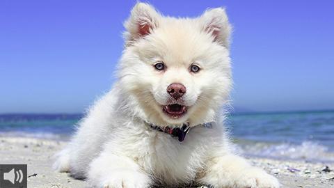 La Diputación de Huelva promueve una campaña para concienciar contra el abandono animal y adoptar mascotas en vez de comprarlas