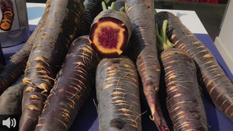 La zanahoria morá regula la función intestinal, protege de enfermedades cardiacas, estimula la visión y potencia el sistema inmunológico