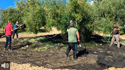 'La propuesta de Luis Planas de transición de la PAC destroza el modelo profesional de agricultura', Miguel López, COAG Andalucía