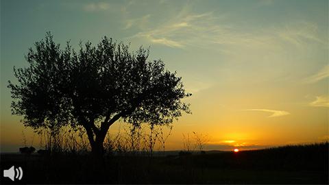 La restauración de las zanjas por el agua en los olivares, reconocida con el galardón culmen del sector de la olivicultura