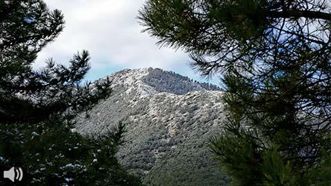 'Sierra Bermeja aporta el 39% del futuro Parque Nacional Sierra de las Nieves, frente al 16% de la cordillera homónima', Pablo Aragón, integrante de GRUNSBER