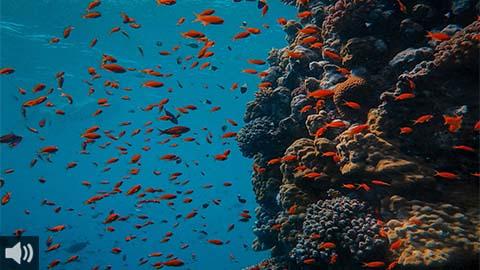 El arte, turismo, voluntariado y la educación ambiental son los puntales del futuro Museo-Arrecife submarino en el Puerto de Adra