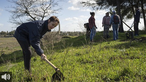 Ecologistas en Acción llama al voluntariado medioambiental para restaurar la Isla de Tercia, en Sevilla