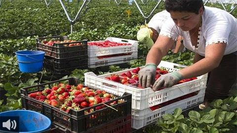 Las organizaciones agrarias denuncian la guerra de precios de las superficies comerciales y su impacto en el beneficio final de los agricultores y agricultoras