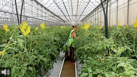 '6 de cada 10 frutas y hortalizas que se consumen en Europa proceden de los invernaderos solares de Granada y Almería', David Baños, Asociación de Productores de Frutas y Hortalizas