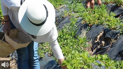 'La agricultura campesina y familiar muestra su fuerza frente a la vulnerabilidad de la internalización de los mercados', Andrés Muñoz, Amigos de la Tierra