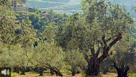 Escritores de todo el mundo participan en el libro 'Alma de olivo' el III Premio de Relato Corto sobre Olivar y Aceite de Oliva
