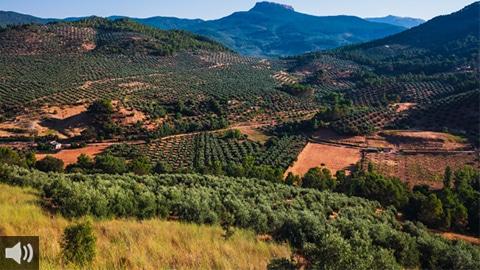 El paisaje del olivar andaluz se posiciona como candidato español para la Lista de Patrimonio Mundial de la Unesco